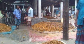 Betel Nut at Durgapur Hat Ulipur Kurigram