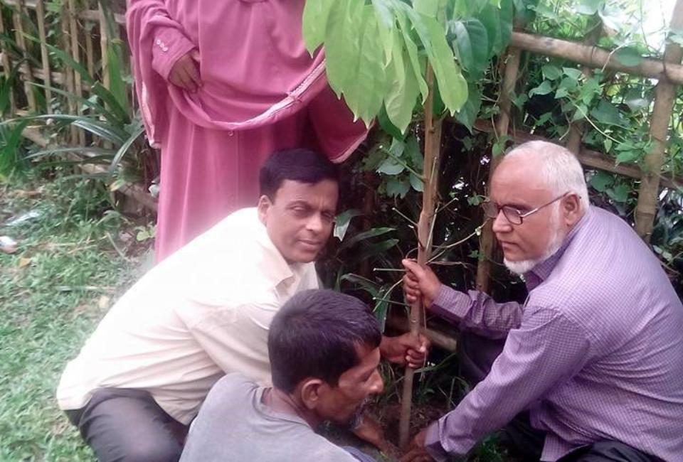 Ulipur-Upazila-Primary-School-Tree-Plantation-2017-6